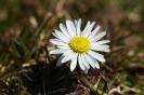 Frühling mit der Nahlinse betrachtet - 5